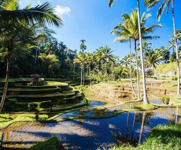 rice-fields-near-ubud-bali-indonesia-small